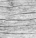 texture of bark wood use as natural background, surface eroded b Stock Photography