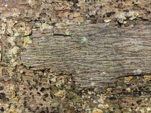 Texture of bark wood use as natural. stock photography