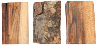 The texture of the bark and wood of walnut Royalty Free Stock Photo
