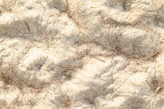 Texture of beach sand covered with dried pine tree leaves Royalty Free Stock Photo