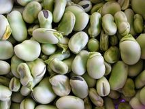 Texture of bean stock images