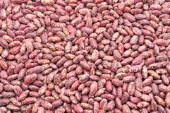 Texture of the beans Stock Image