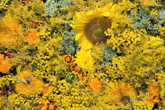 Texture of beautiful yellow and orange flowers Royalty Free Stock Photos