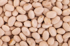Texture of Beige Beans Royalty Free Stock Images