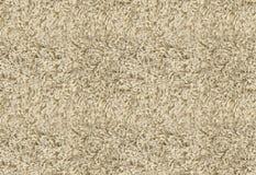 Texture beige de tapis photos libres de droits