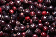 Texture of berries chokeberry stock photo