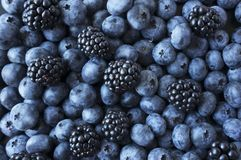 Texture berries close up. Top view. Black and blue berries. Ripe blueberries and blackberries. Various fresh summer berries. Mix berries royalty free stock photos