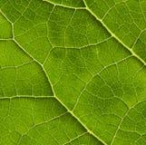 Texture biologique photos libres de droits