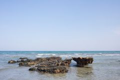 Texture of biology at the sea shore showing mussel reef on the beach wildlife. Stock Image
