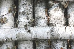 Texture of birch bark as natural wooden background Royalty Free Stock Photo