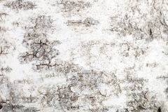 Texture of a birch bark, blurry around the edges Stock Photos