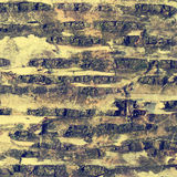 Texture of birch bark Stock Photography