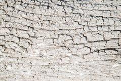Texture blanche d'écorce d'arbre Image libre de droits
