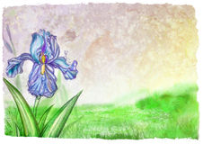 Texture and blooming lilac iris vector illustration