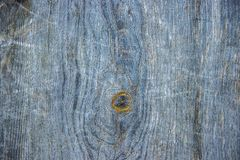 Texture blue, old tree Royalty Free Stock Photography