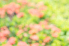 Texture blur color background , abstract mix nature blur. Texture blur color background ,abstract mix nature blur stock image