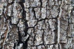Texture of bole Stock Photos