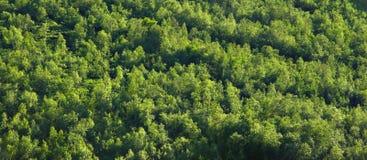 Texture boréale de forêt Images libres de droits