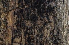Texture brûlée d'arbre Photographie stock libre de droits