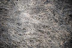Texture brûlée d'herbe Image libre de droits