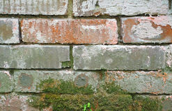 Texture of a brick foundation with an old moss Royalty Free Stock Photo
