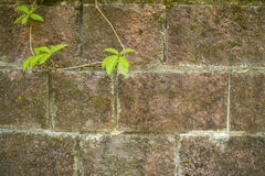 Texture of brick and moss royalty free stock photos