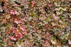 Texture brillante d'automne Photos stock