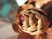 Texture Brown cone in the forest close up royalty free stock photography