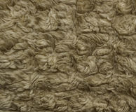 The texture of brown fur Stock Image