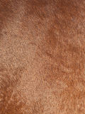 Texture of brown horse fell Stock Photography