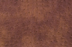 Texture of brown leather Royalty Free Stock Photography