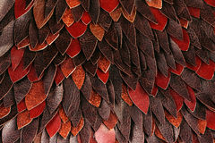 Texture of brown leather leaves Royalty Free Stock Photography