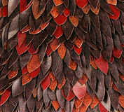 Texture of brown leather petals Royalty Free Stock Photography