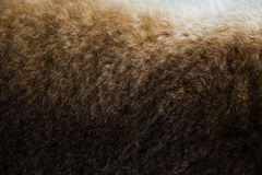 Texture of brown rabbit fur. Macro lenses Royalty Free Stock Photo
