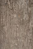 A texture of brown tree bark Royalty Free Stock Image