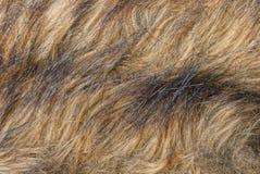 Texture brune grise de longue laine sur des vêtements Images libres de droits