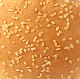 Texture of buns with sesame seeds Royalty Free Stock Images