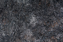 Texture of burnt grass Royalty Free Stock Image