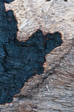 texture of burnt tree after fire Royalty Free Stock Photography
