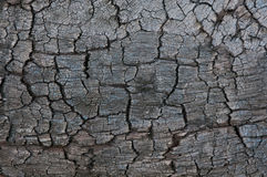 Texture of burnt tree after fire Royalty Free Stock Photo