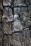 The texture of the burnt tree Stock Image