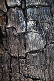 The texture of the burnt tree royalty free stock image