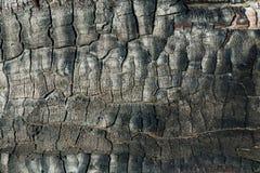 Texture of burnt wood stock photo