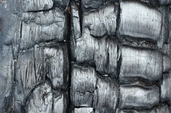 Texture of burnt wood. Stock Images