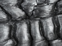Texture of burnt wood. Royalty Free Stock Image