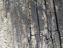 Texture of burnt wood. May be used as background Stock Photo