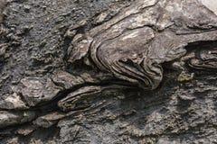 Texture of Calc-silicate rock (Metamorphic rock). Selective Focu Royalty Free Stock Photo