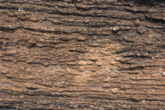 Texture of Calc-silicate rock (Metamorphic rock). Royalty Free Stock Photos