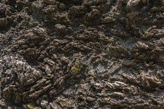 Texture of Calc-silicate rock (Metamorphic rock). Royalty Free Stock Photo