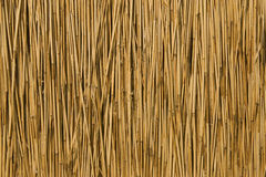 Texture of cane dry Royalty Free Stock Images